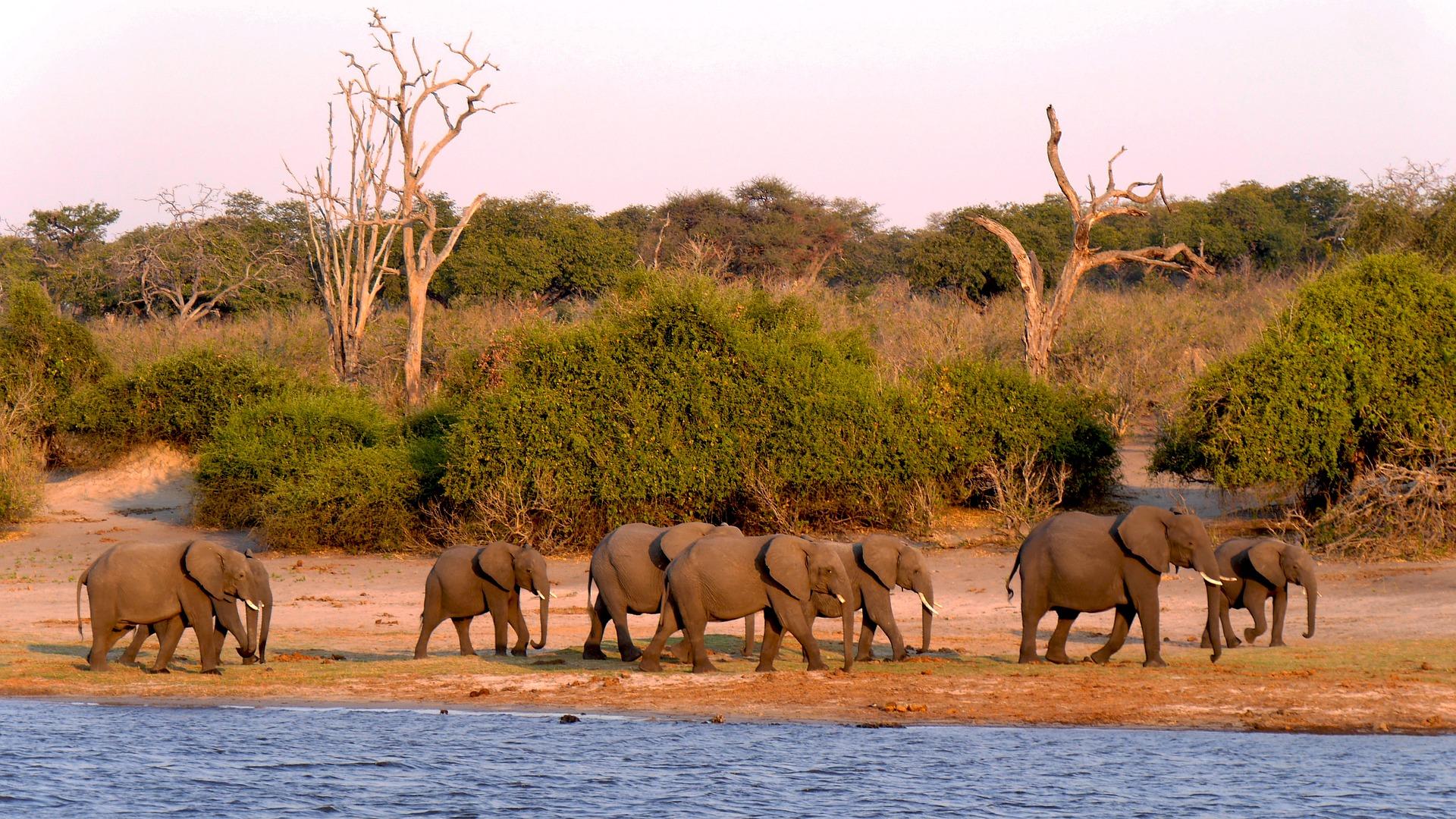Rundreise Botswana: Empfehlungen & Vergleich (04/20)