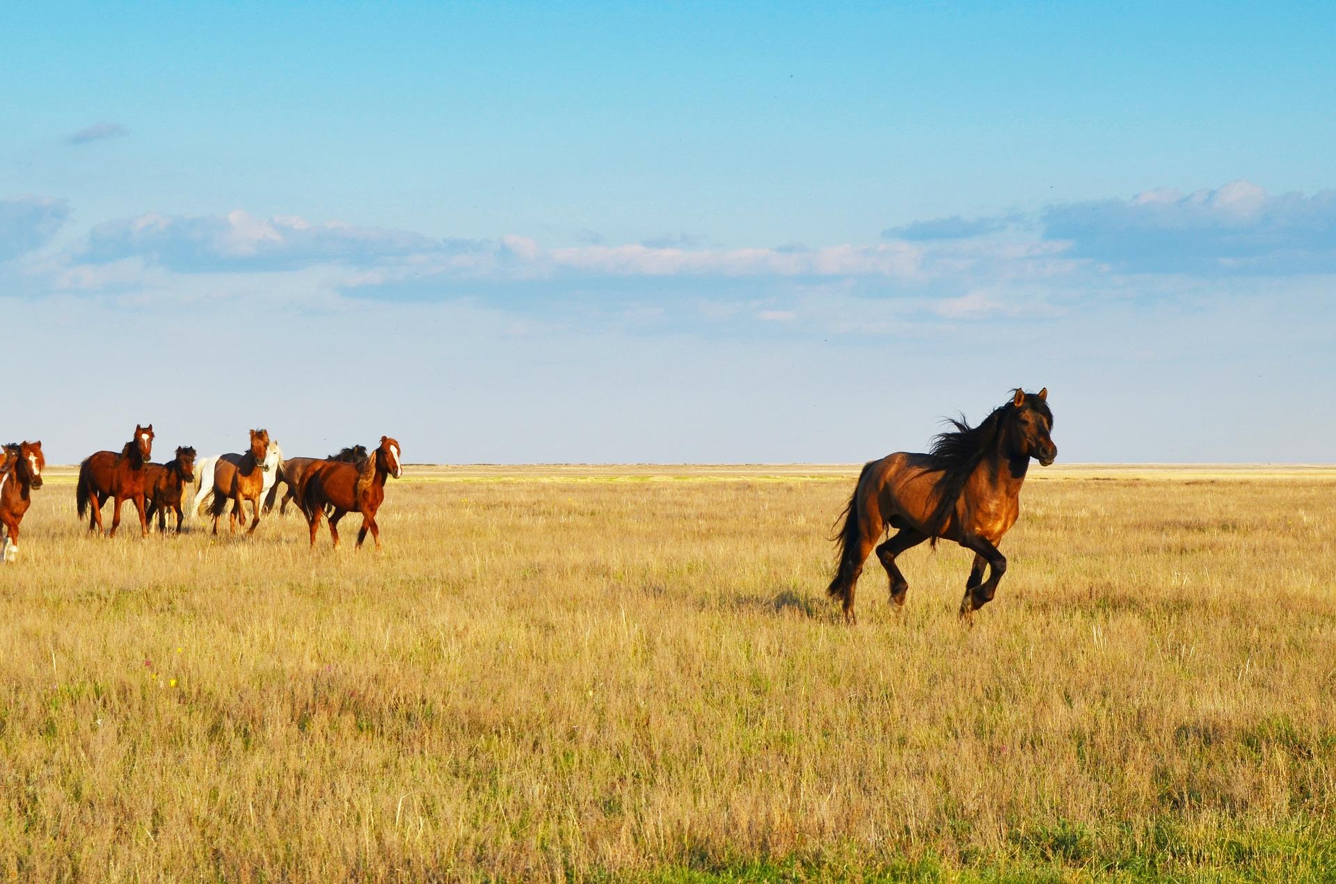 Rundreise Kasachstan: Empfehlungen & Vergleich (07/20)