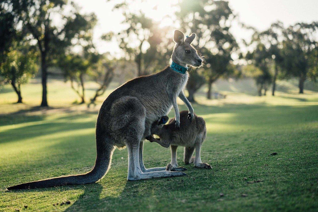 Rundreise Westaustralien: Empfehlungen & Vergleich (08/20)