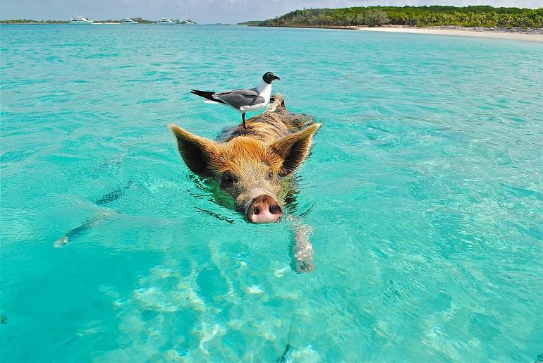 Rundreise Bahamas: Empfehlungen & Vergleich (01/20)