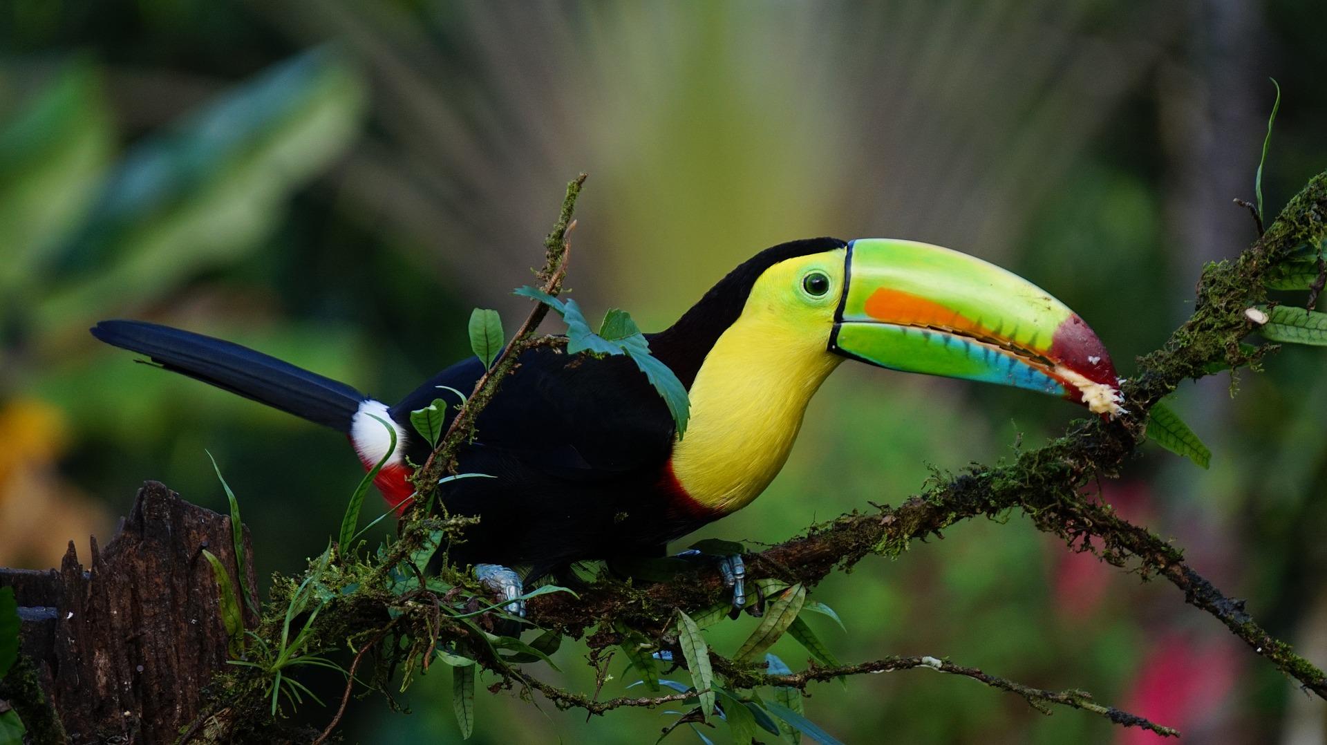 Sprachreise Costa Rica: Empfehlungen & Vergleich (01/21)