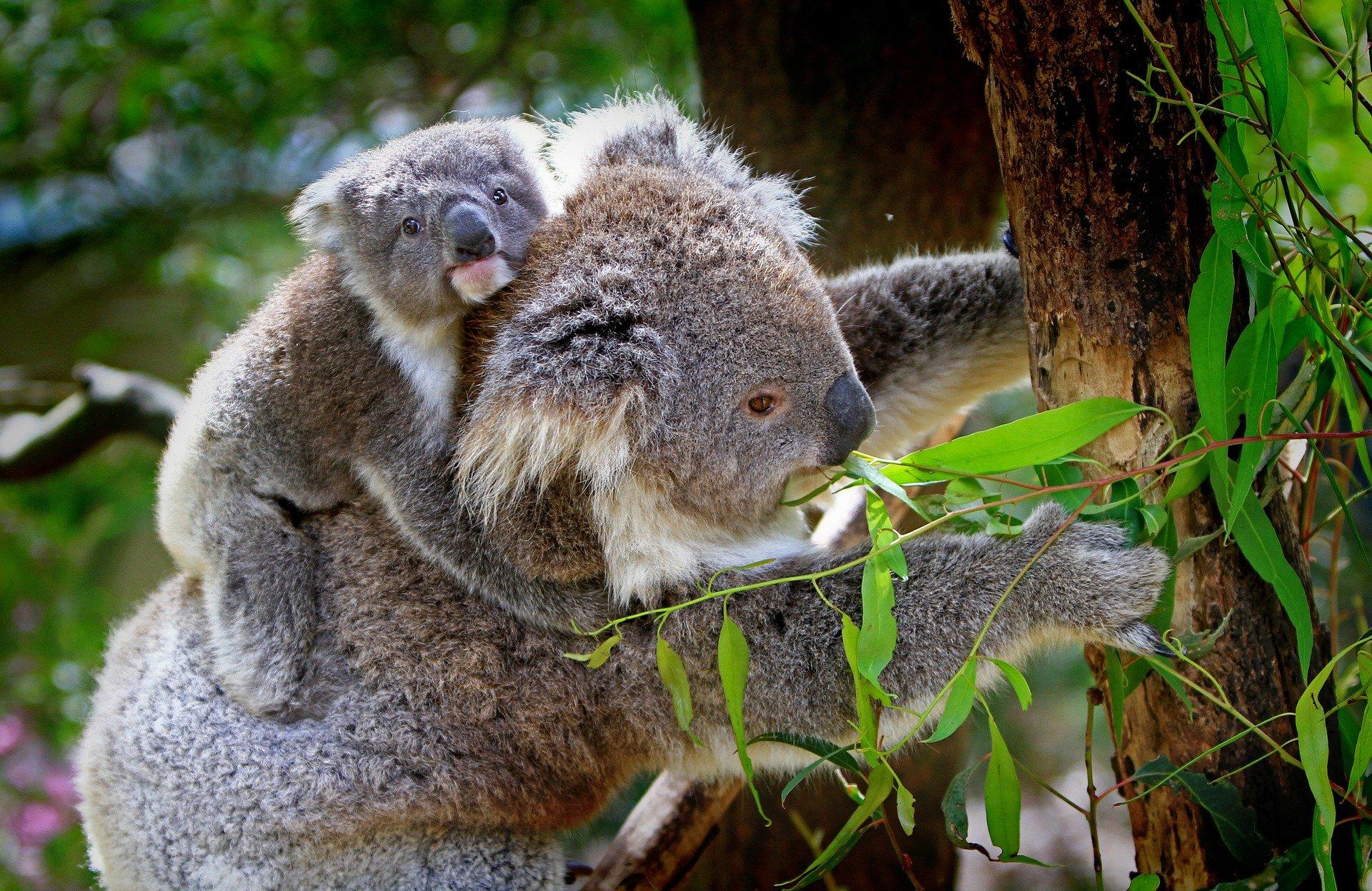 Sprachreise nach Australien: Empfehlungen & Vergleich (04/20)